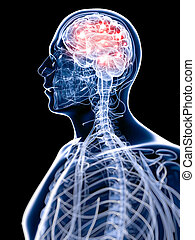 Active brain - 3d rendered illustration of an active brain