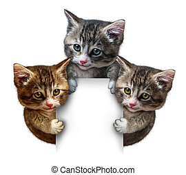 Cat Group Blank sign - Cat or kitten group around a blank...