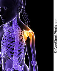 Highlighted shoulder - 3d rendered illustration of a painful...