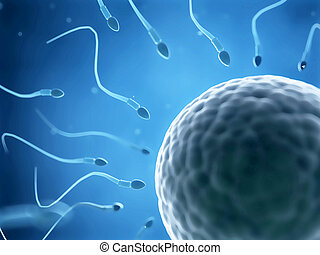 The fertilization - 3d rendered illustration of the...
