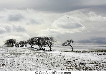 Winter scene - Beautiful winter scene with trees and fields