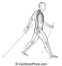 Nordic walker - 3d rendered illustration of a nordic walker