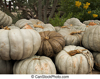 Pile of White Pumpkins - Pile of white pumpkins with one...