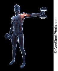 Shoulder workout - 3d rendered illustration of a guy doing a...