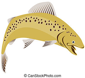 Rainbow trout - Illustration of a trout fish