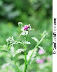 bur on a green background in garden