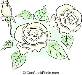 White roses - Sketch of white roses in transparent colors...