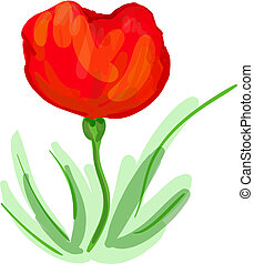 Poppy illustration