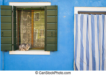 Cat on a window sill, Burano, Italy
