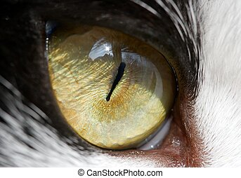 Cat Eye - Eye of a cat - detailed closeup