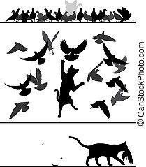 gato, entre, palomas