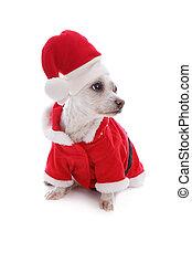 Christmas festive dog wearing santa hat looks sideways