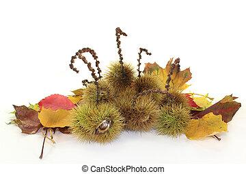sweet chestnut - ripe sweet chestnuts against white...