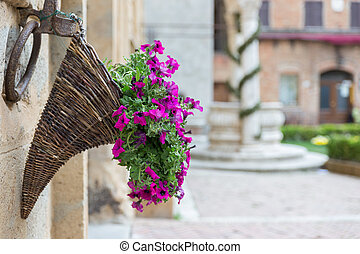 Flowers at Marketplace in Pienza, Tuscany