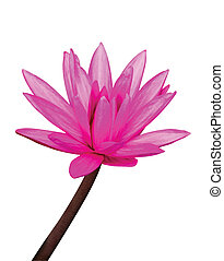 Vector Water Lily - Vector version of water lilly cutout on...