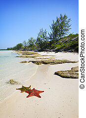 Cayo Guillermo, cuba - View of tropical cuban beach with...