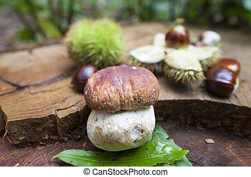 Cep and chestnuts on fresh stump