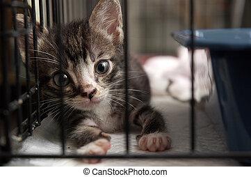 kitten in cage - cute kitten in cage