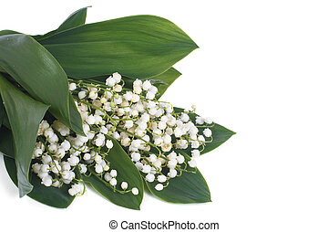 lilies of the valley isolated