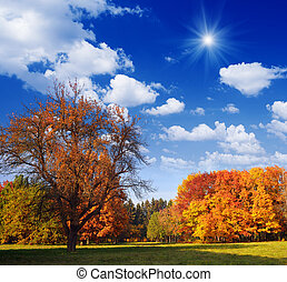 Autumn Landscape - Beautiful autumn landscape in the park...