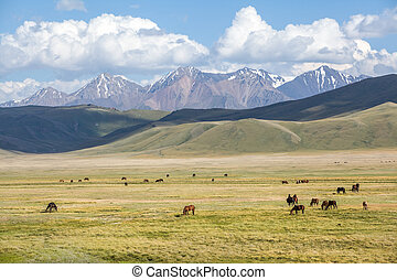 Group of horses pasturing in mountains - Big group of horses...