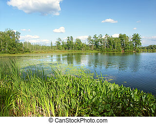 Little Bearskin Lake Wisconsin - Emergent aquatic vegetation...