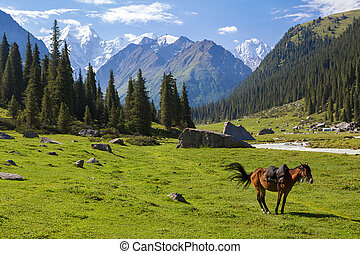 Mountain landscape with horse, Tien Shan, Kyrgyzstan
