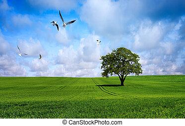 綠色, 樹, 草地