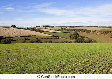 yorkshire wolds agriculture - a picturesque view of farming...