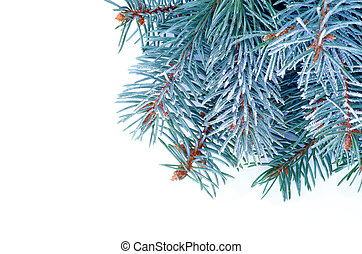 Blue Spruce Branch - Corner Border of Blue Spruce Branches...