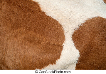 Cow hide texture - Bright and detailed cow hide texture