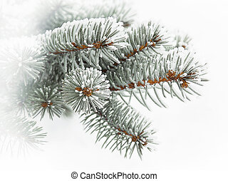 Evergreen branch covered with snow, shallow depth of field...