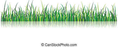 Vector Grass Illustration - Grass illustration