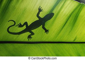 gecko - Lizard backlight silhouette in a green leaf