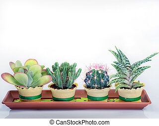 succulent cactus plants in a rectangular vessel white...