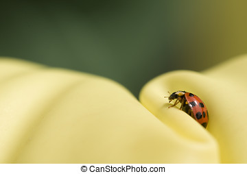 all right - close up ladybug on green and yellow background