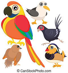 bird set-07 - five colorful cute birds with white background