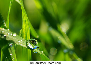 dew drop on grass  - Dew drop on a blade of grass