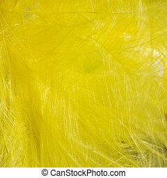 Yellow bird feather texture for background