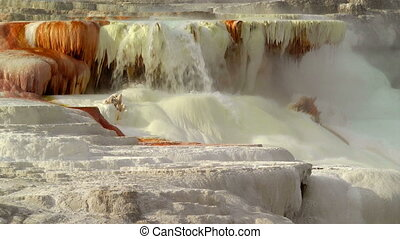 Canary Spring, Yellowstone - Mammoth Hot Springs,...