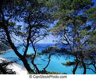 Halkidiki - Turquoise water and trees of Halkidiki, Greece