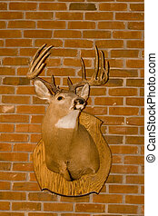 Deer Head on Brick - A deer head mounted on a brick wall