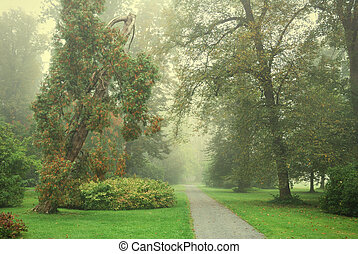 Forest park footpath and trees in morning fog