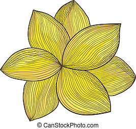 Yellow flower - Vector illustration of a yellow flower. Ink...
