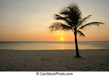 Roatan Sunset - Sunset on the beach on the Island of Roatan,...