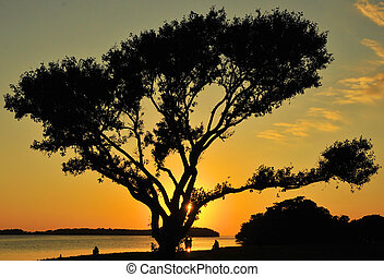 Sunset Shade - Sunset in the Everglades