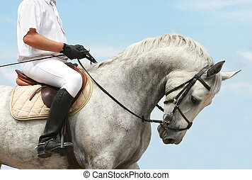 jokey on dressage horse - riding competition. jokey on...