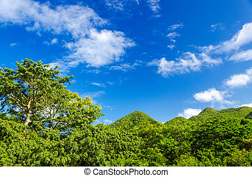 Green Hills and Blue Sky - Lush green forest covered hills...