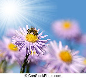 Flowers with bee - Spring flowers with bee