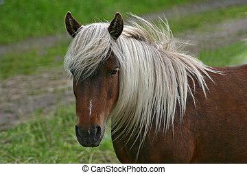 pony - Shetty,